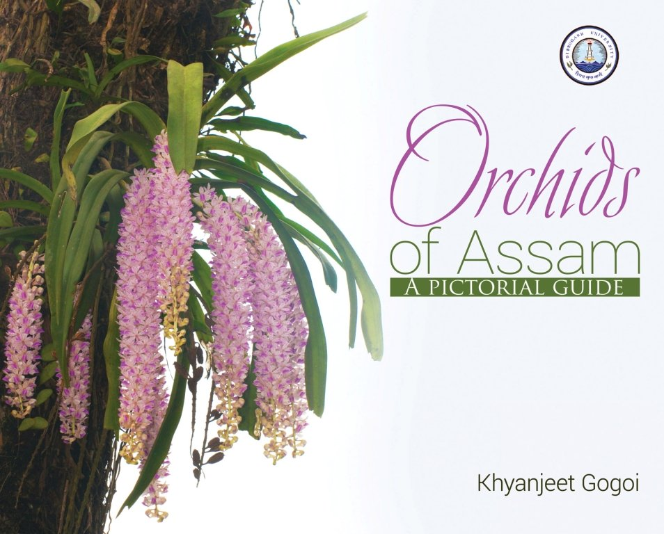 for website orchids copy